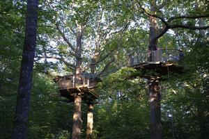 cabane hamac cabanes dans les arbres dans le perche. Black Bedroom Furniture Sets. Home Design Ideas